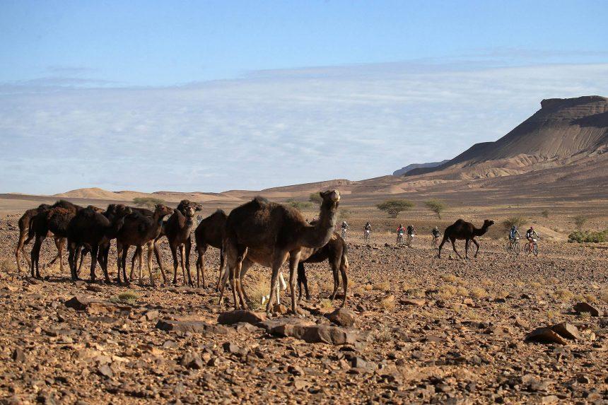 3° Etapa Titan Desert By Garmin Boumalde Alnif-Rissani La más larga de la Titan Desert con 122km